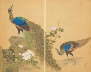 牡丹孔雀図屏風